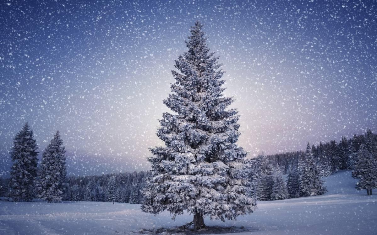 kerst-herberg-de-pol